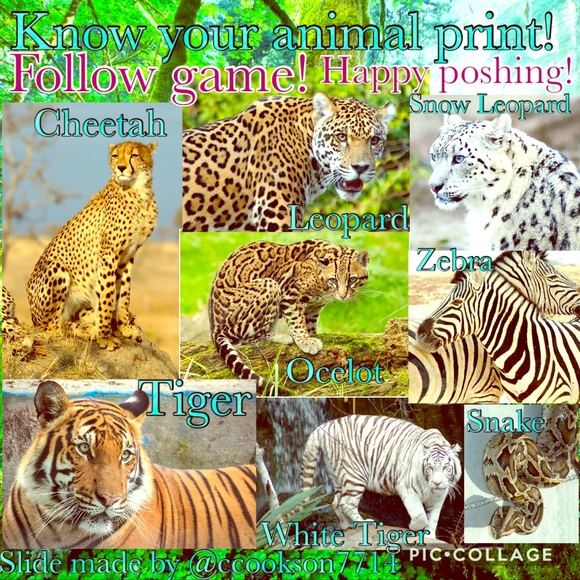 a792c03ab37 Variety Other | Follow Game 3 Know Your Animal Print | Poshmark